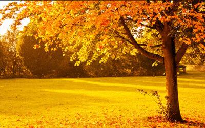 Autumn Leaves (枯葉)