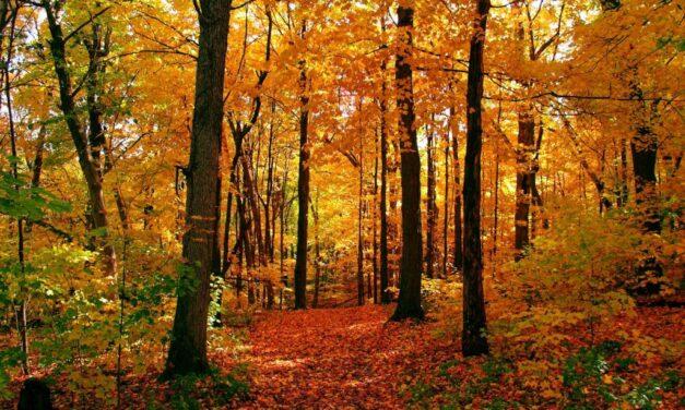 'Tis Autumn