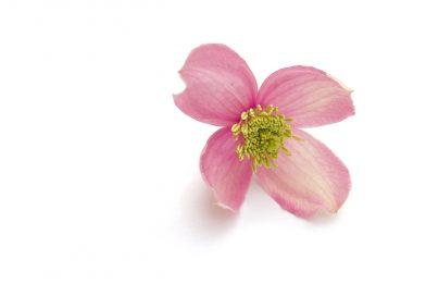 A Blossom Fell